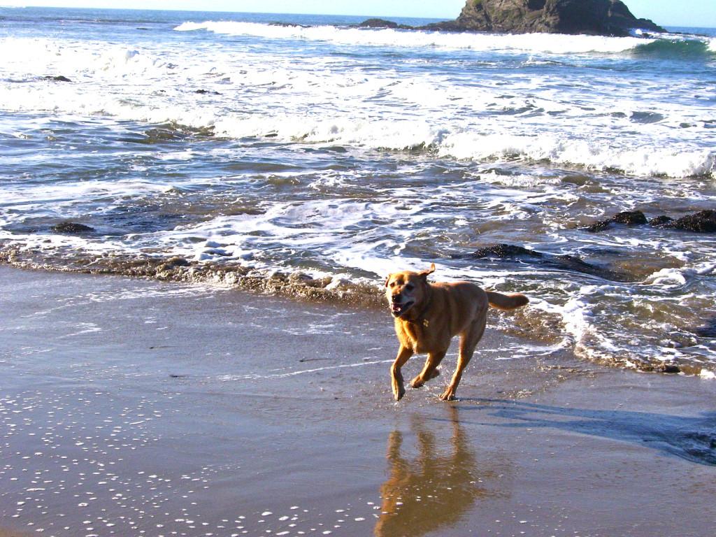 Sanchez Anchor Bay Beach 2010