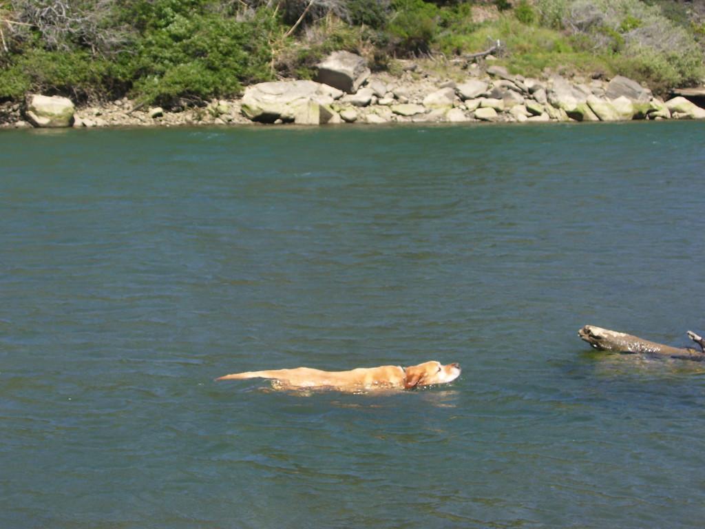 Sanchez swimming in Gualala river