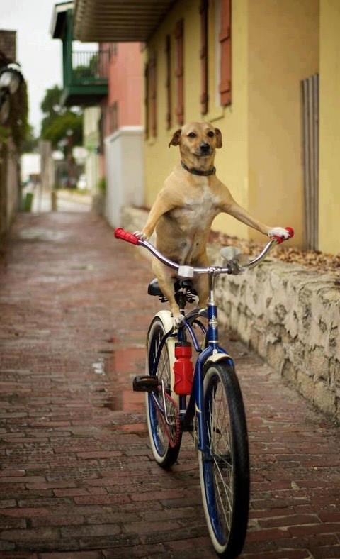 Dog Cycling