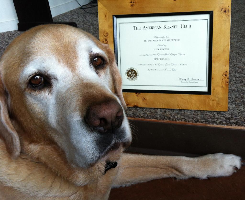 Sanchez AKC CGC Certificate