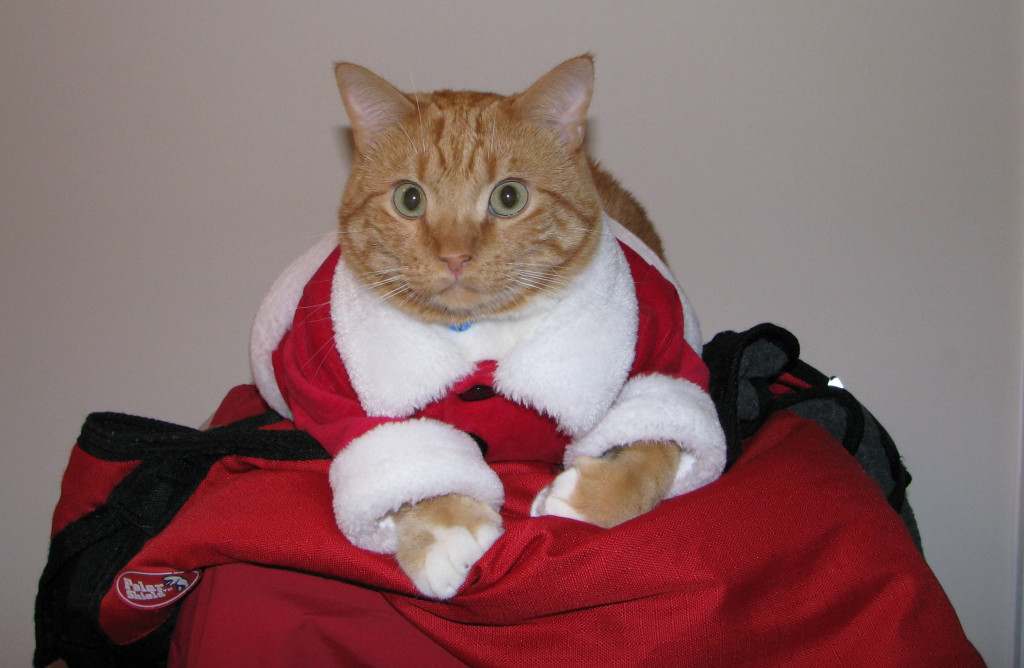 Niko the cat in santa suit