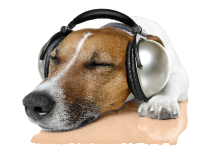 dog with ear protection listening to iCalmDog Reggae
