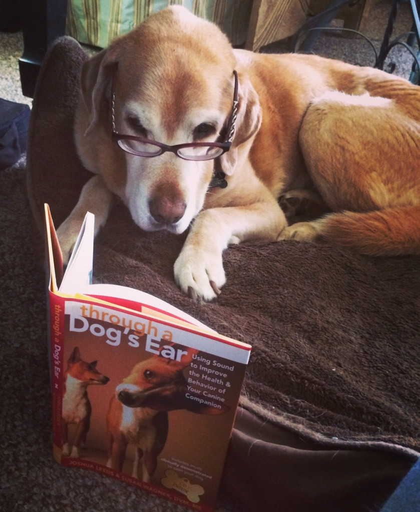Sanchez Reading Through a Dog's Ear Book