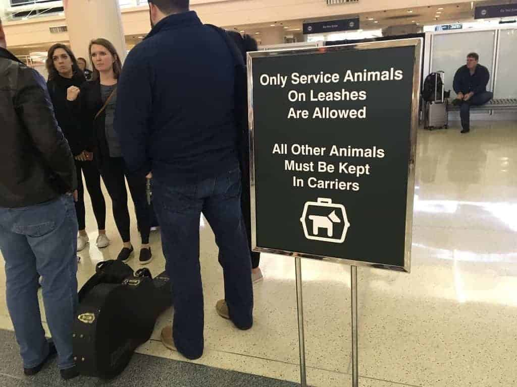 airport service animal calming download dog music