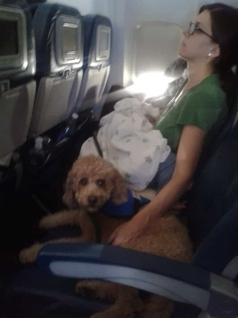 service dog on airplane calming music for dogs