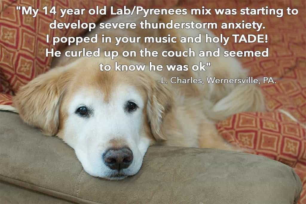 Elderly canine music to sooth anxiety in older dogs