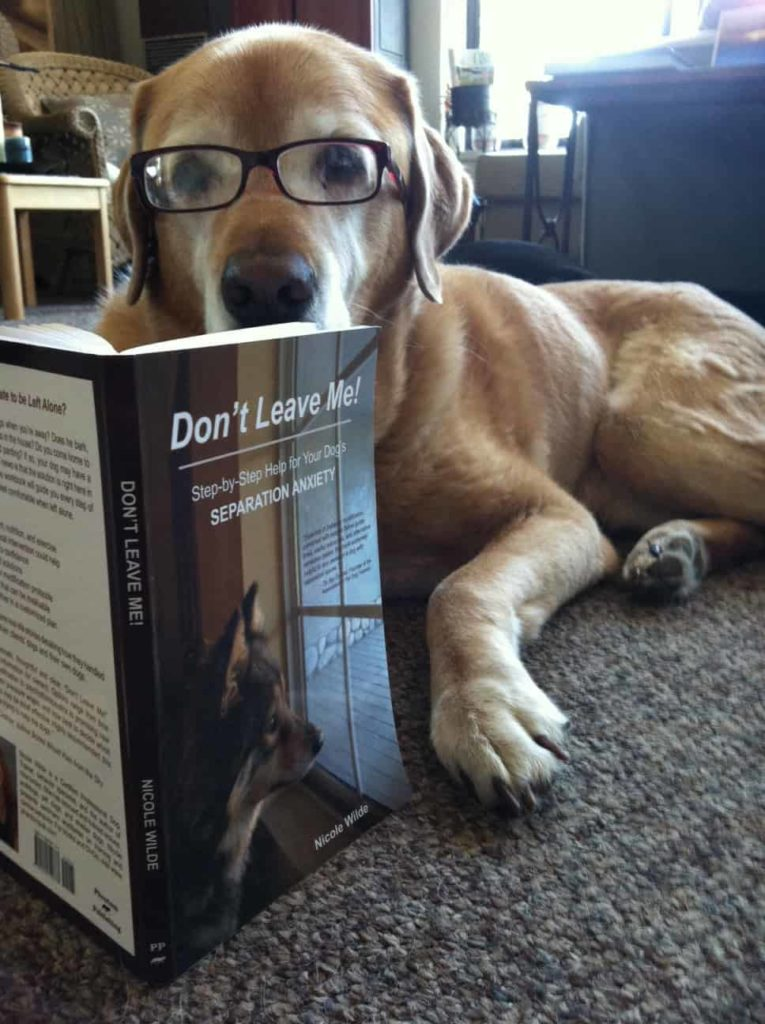 Dog with separation anxiety reading a book on training methods