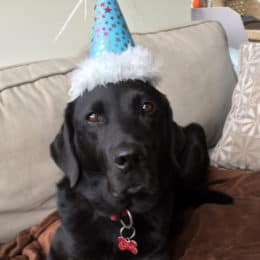 A Letter to My Dog On Her 8th Birthday