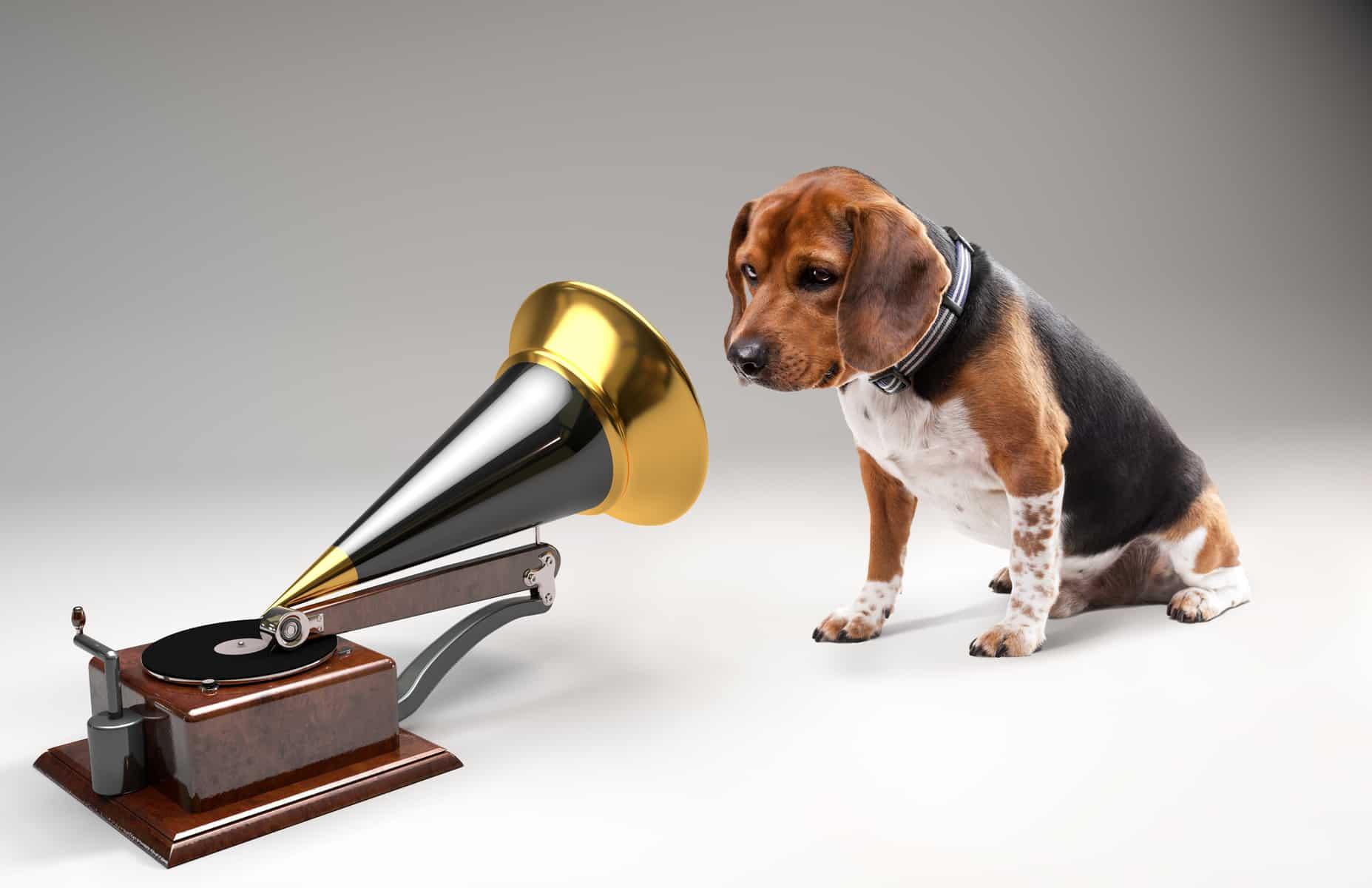 Dog Listening To Music Icalmpet