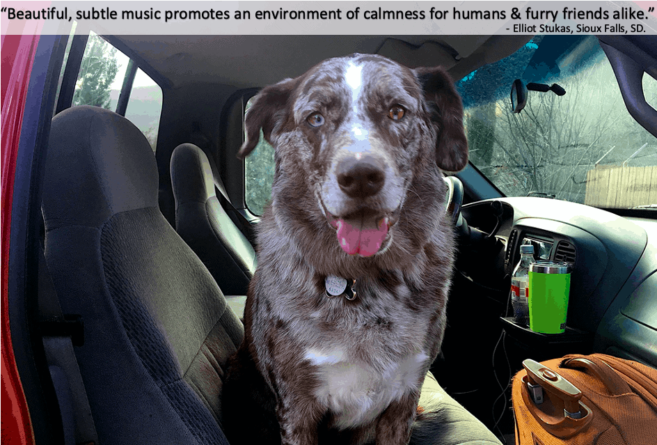 calm your canine is dog calming music that works