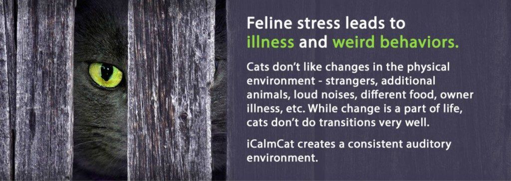 music for feline stress