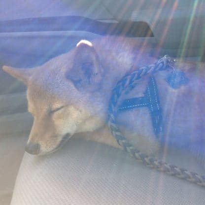 music for dogs in the car