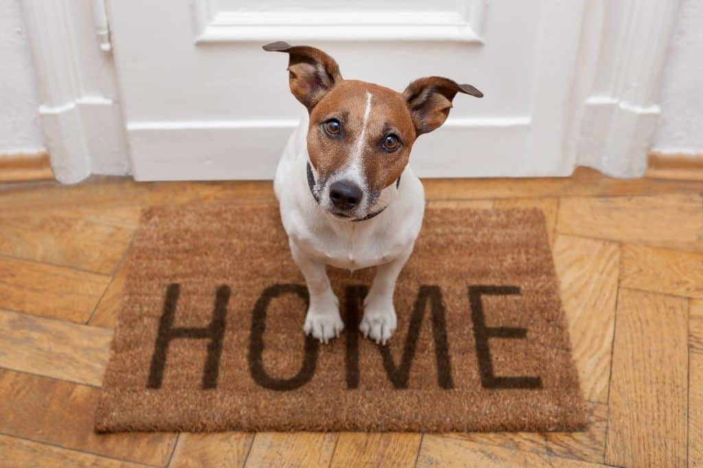 5 Easy Tips to Help Your Dog's Separation Anxiety | iCalmPet