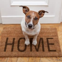 5 Easy Tips to Help Your Dog's Separation Anxiety