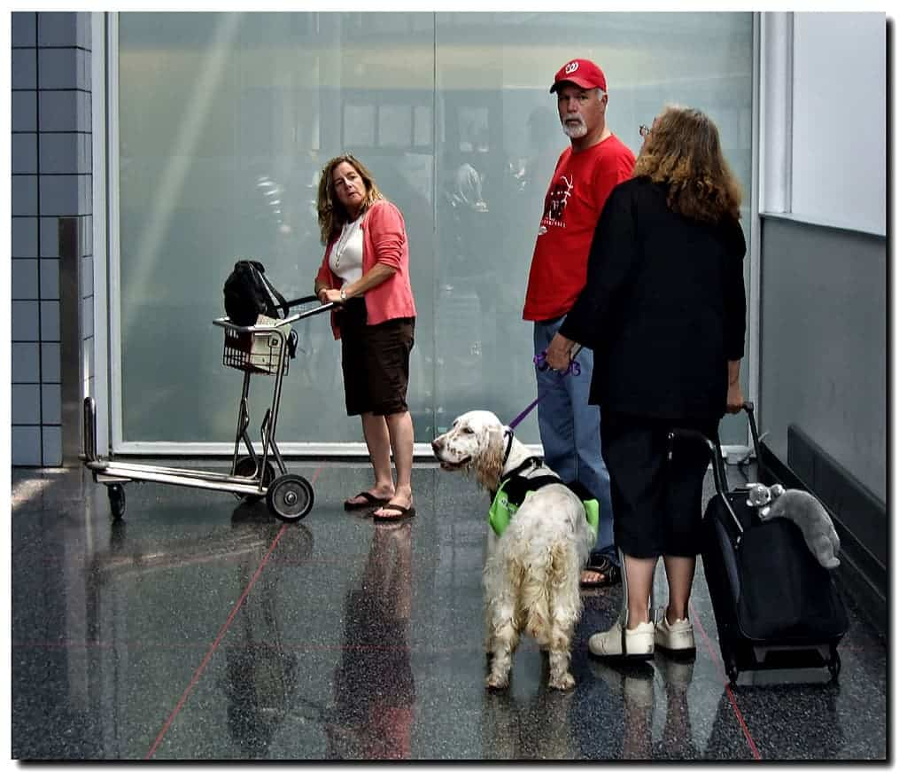 relaxing music for dogs being calm at airport